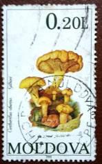 Марка. Гриб. Молдова. 1995 г.