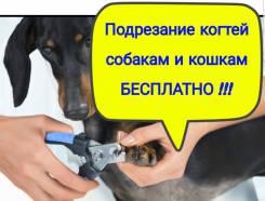 Подрезание когтей - Бесплатно