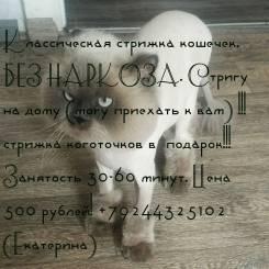 Стрижка котиков и собак