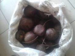 Оптом овощи -Свекла от фермерского хозяйства