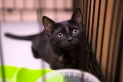 Очаровательная кошечка со звонким именем Полька