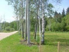 Для дома, дачи и жилья. 15 соток земли. Рядом ж/д станция, лес, водоем. 1 500 кв.м., собственность, электричество, вода, от агентства недвижимости (п...