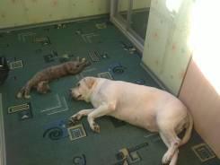 Домашняя передержка собак и кошек на Баляева