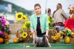 Услуги хендлера (демонстрация собак на выставках)