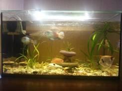 Аквариум с рыбкоми