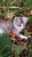 Продам котенка Мышелова. Кошечка. Очень красивая . Пушистая.