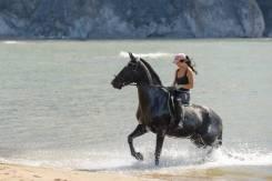 Конные прогулки и фотосессии в Находке