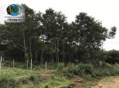 Земельный участок на Лесной-2 (Артём). 1 200кв.м., собственность. Фото участка