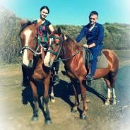 Конные прогулки , обучение верховой езде