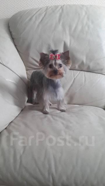 Грумер Елена. Стрижка собак и кошек