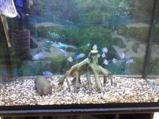 Обслуживание аквариумов!