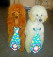 Шоу дрессированных собачек на детский праздник (аниматор/герой/актер)