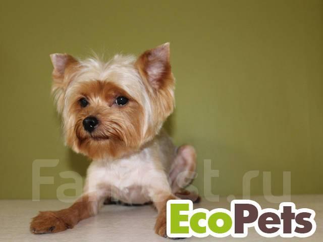 """Студия красоты для животных """"EcoPets"""". Стрижка собак и кошек! Акции!"""