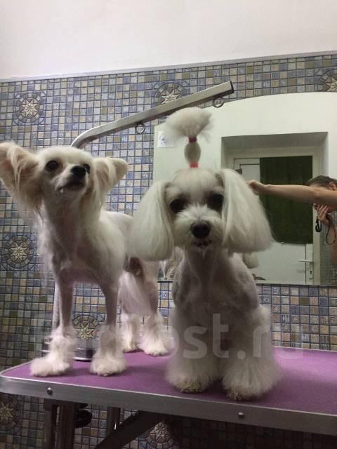 Акция: стрижка собак мелких пород 700р, кошки 900р до конца ноября