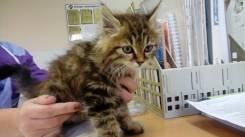 Пушистый котик в добрые руки