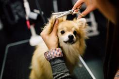 "Стрижка собак и кошек, груминг салон ""Barberdog"""