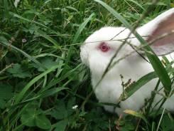 Кролик. Под заказ
