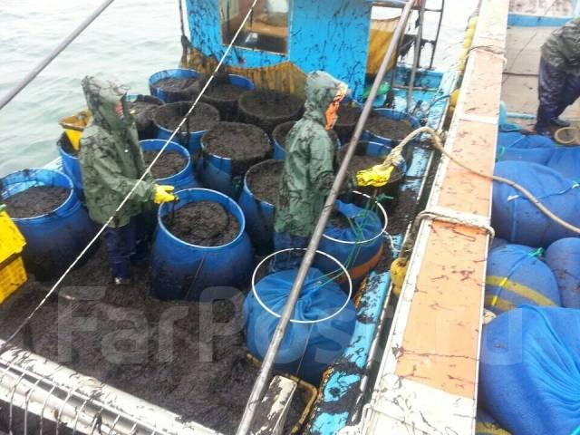 Морские виды Работ в Ю-Кореи! Выезд 30.05 и 06.06 Паром 23 000 руб.