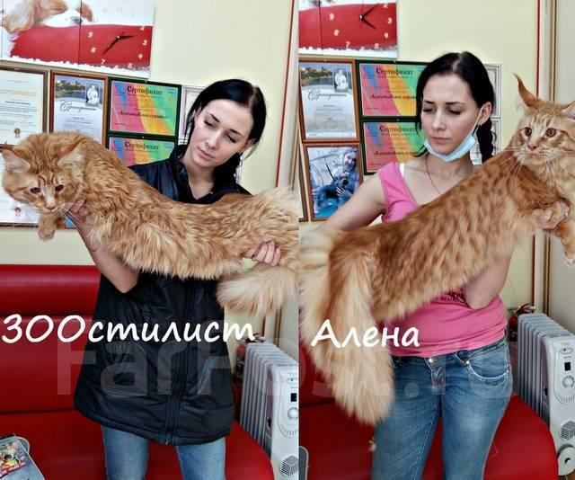Стиляги! Модельн/Креативные стрижки, подготовка к выставке собак/кошек