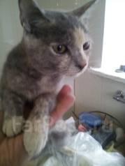 Котёнок девочка счастье(трехцветка)