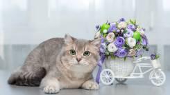 Продаётся котик