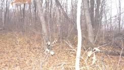 Продам 12 соток, мкр. Лесной-2. 1 200 кв.м., собственность, от частного лица (собственник). Фото участка