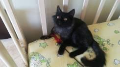 Котёнок шикарного окраса