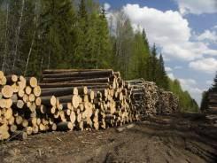 Услуги лесозаготовки. Заготовка леса с деляны.