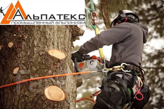 Цены. Удалению аварийных деревьев, Санитарная обрезка, Кронирование.