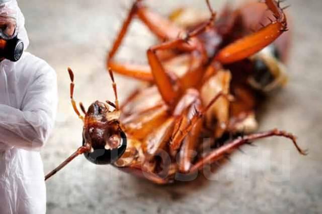 Уничтожение тараканов! Дезинсекция! Скидки! Жми!. Акция длится до 15 февраля