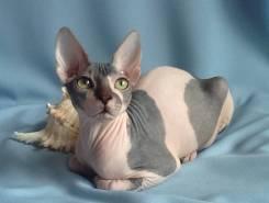 Коты на продажу во владивостоке