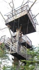 Строительство дома на деревьях