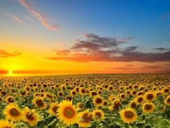 Продается сельхоз массив в Крыму. 32 000 000 кв.м., собственность, аренда, от агентства недвижимости (посредник)