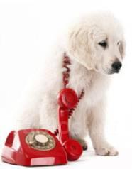 Ветеринарная помощь на дому. Стрижка собак и кошек. Выезд.