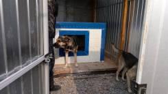 Передержка для собак
