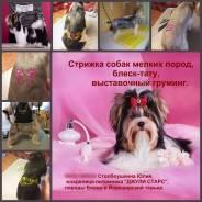 Стрижка собак мелких и средних пород