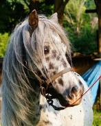 Лошади. Под заказ