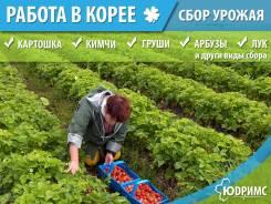 Сельхоз Работы в Южной Корее !