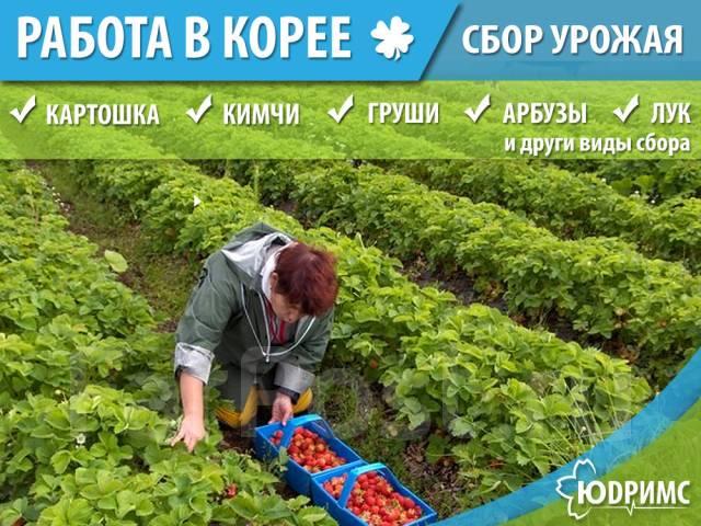 Сельхоз Работы в Южной Корее Много Работы для Женщин
