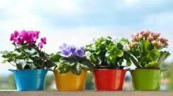 Возьму цветы любые . можно без горшков. отблагодарю