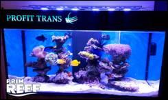 Аквариум - морской, пресноводный, торговый для живых морепродуктов