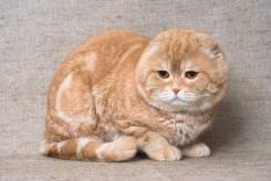 Кот приму в дар