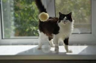 Кошка умница и красавица