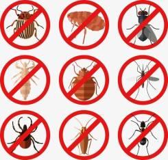 Уничтожение тараканов, клопов, блох, крыс! Опыт работы 10 лет! Договор!