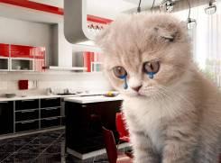 Не печаль котика! Закажи Кухню на заказ ! Недорого от 8000 п/м. Здесь!
