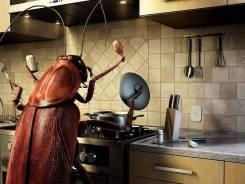Уничтожение всех видов насекомых! Договор, гарантии, качество!