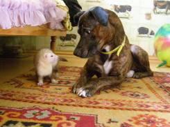 Передержка (гостиница для животных)