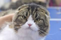 Дипломированный грумер-фелинолог приглашает на стрижку кошек