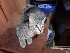 Невероятный котёнок