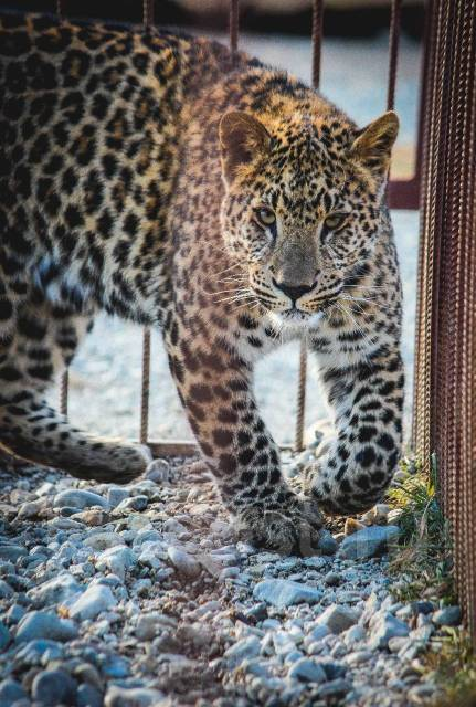 50% скидка на посещение зоопарка